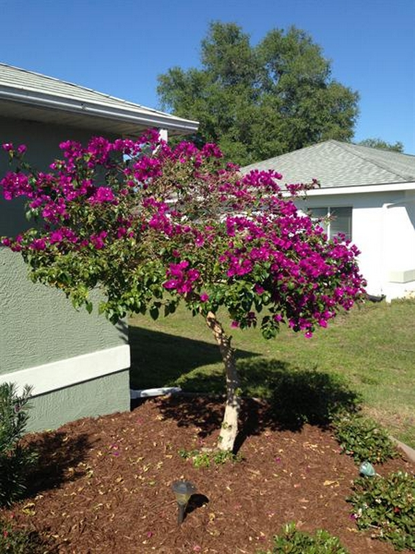Craig's Perfect Turf Landscaping, Port Charlotte Florida